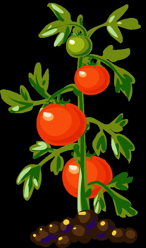 Tomato Plant Tomatoplantsdrawing Plant Illustration Tomato Tree Tomato Plants