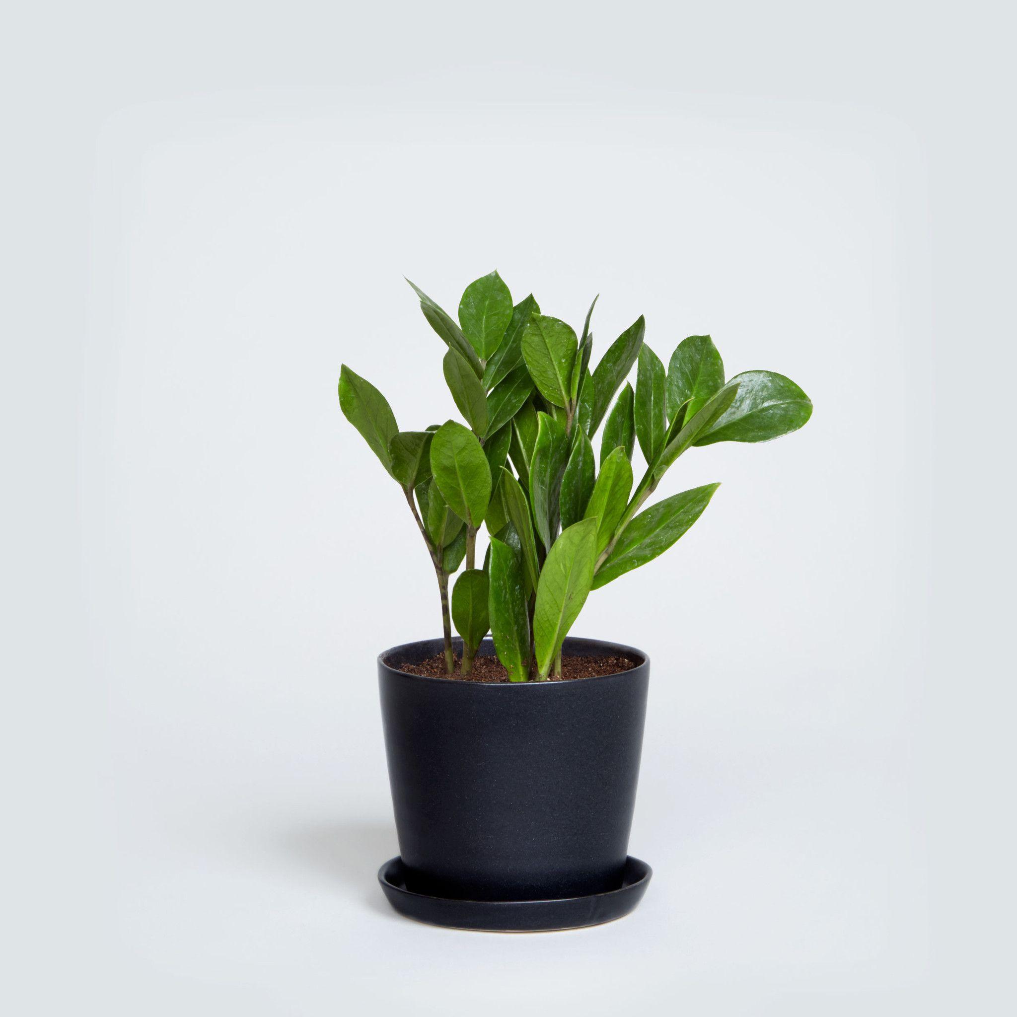 Best Low Light Plants For Bedroom: Low Light Plants, Indoor Plants Low Light