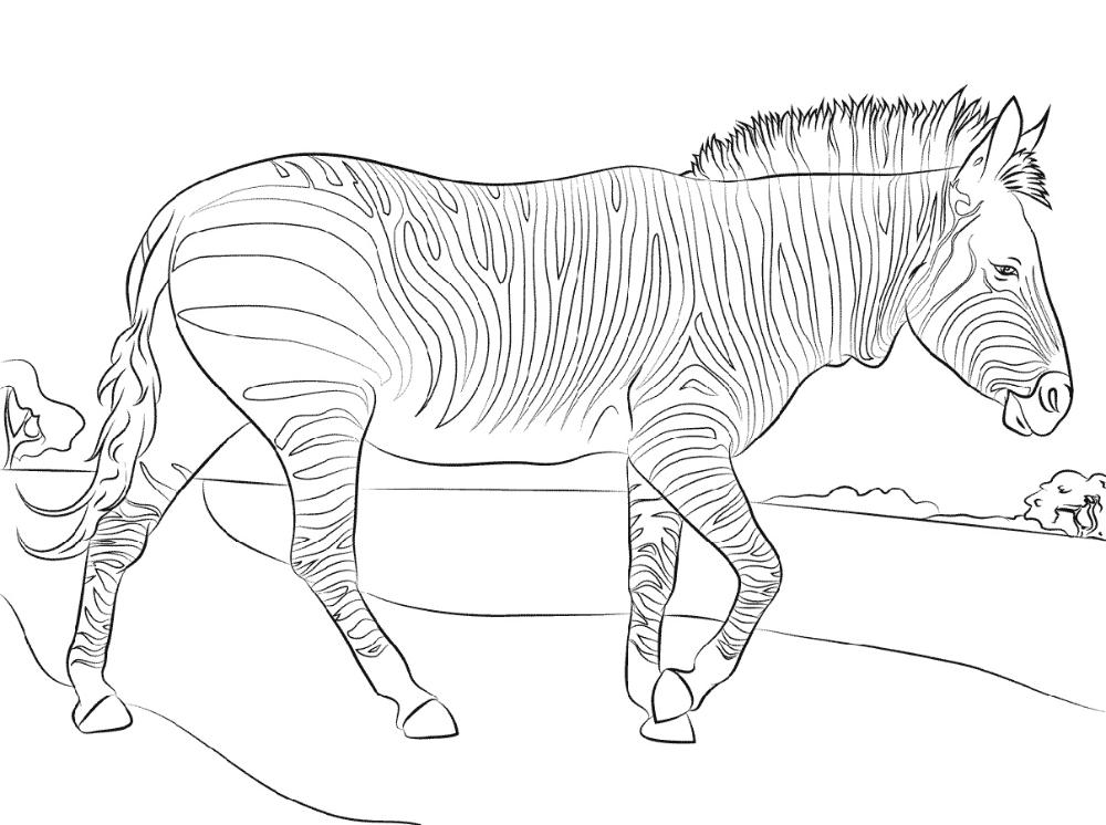 Zebra Coloring Pages Free Printable Zebra Coloring Pages Coloring Pages Zebra