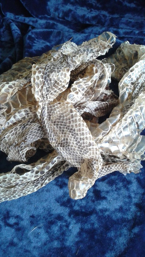 Gaboon Viper Skin Shed Pieces - USE VENOMOUS SNAKE SKINS IN