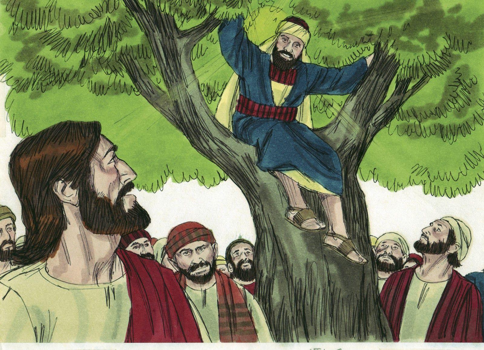 Zacchaeus   Zacchaeus and Sunday school