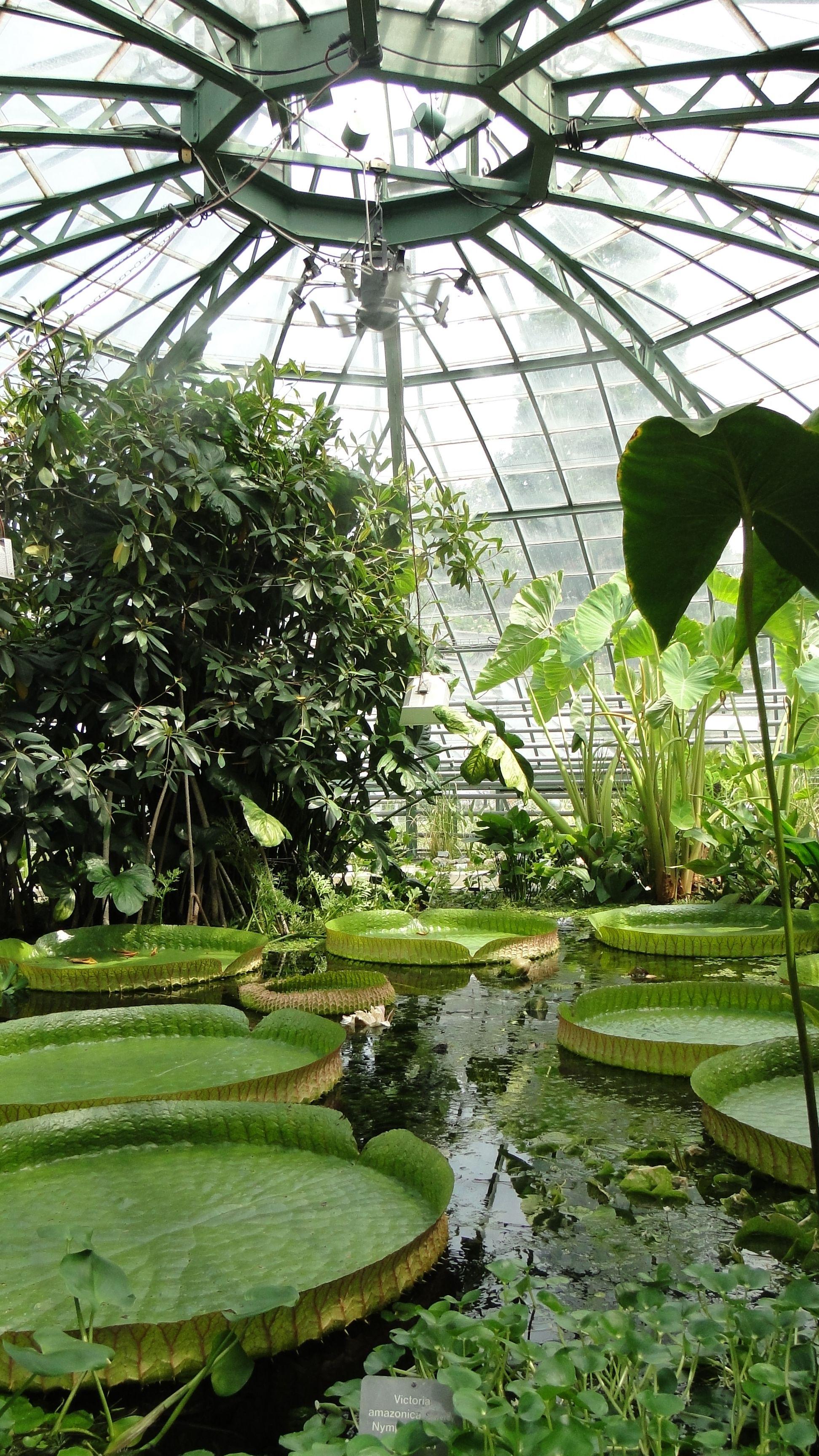 Carathotels Blog Botanischer Garten Basel Garten