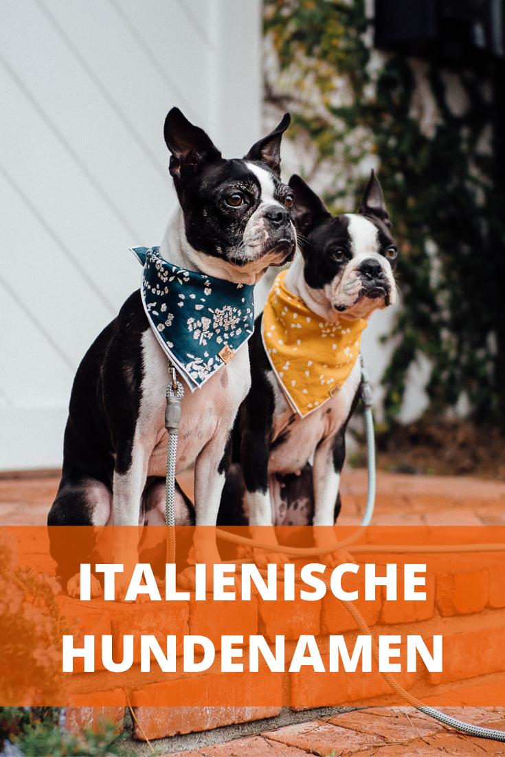 Italienische Hundenamen Weiblich Und Mannlich Mit Bedeutung Hundenamen Weibliche Hundenamen Hunde