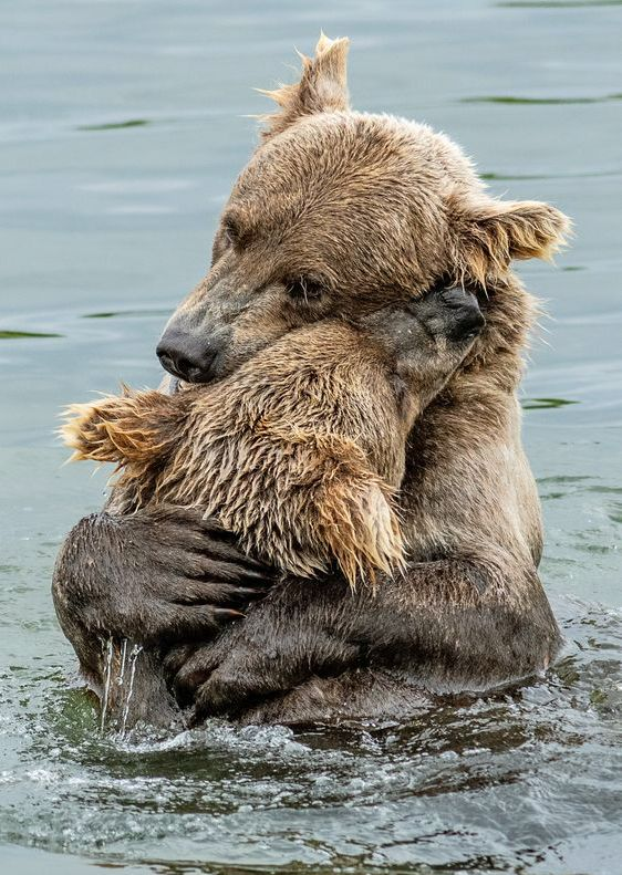 ♔ Bear hug