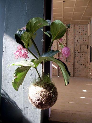 Designer und Stylisten entdecken Topfpflanzen und Moos Blumenampeln