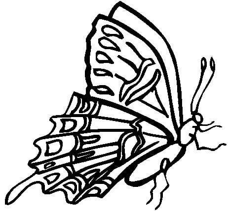 Butterfly Embroidery Design Butterfly Coloring Page Butterfly
