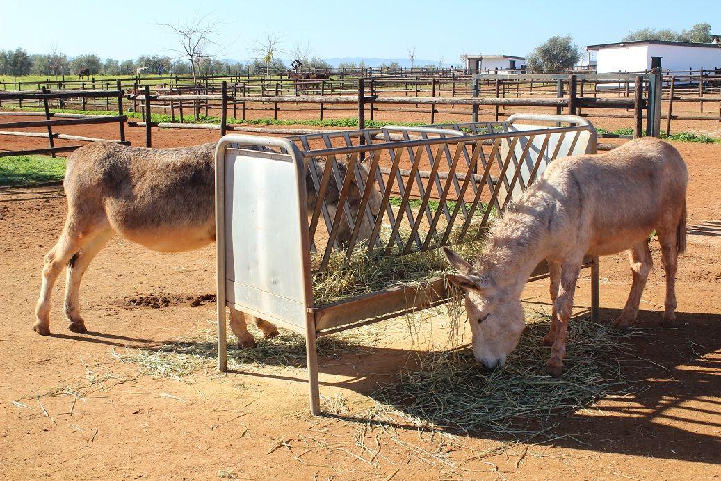 El Refugio del Burrito  http://www.elrefugiodelburrito.com