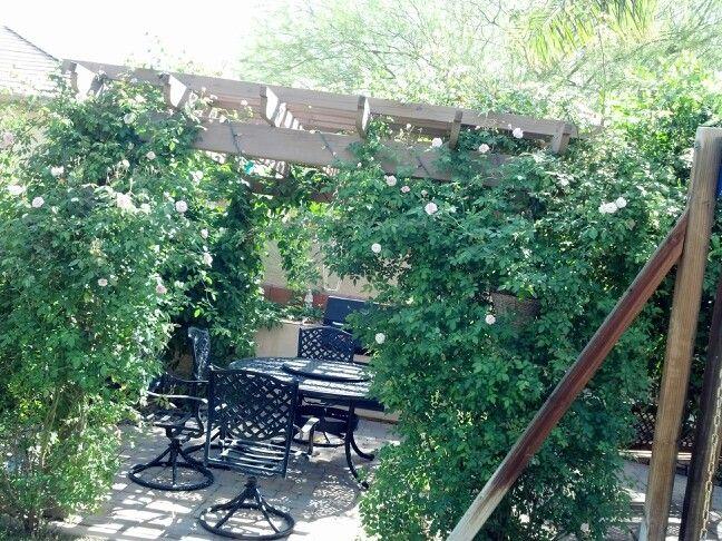 Rose Vines And Passion Fruit Vine On Pergola Yard Decor Backyard Outdoor Decor