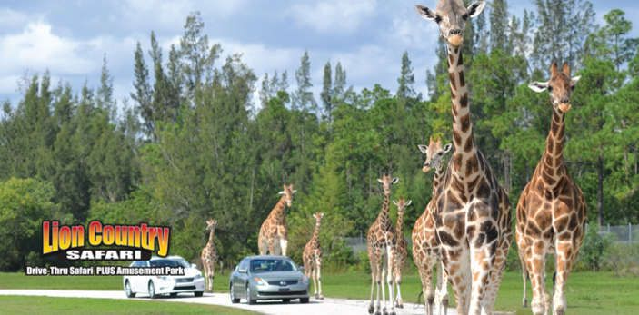Things to do in the palm beaches lion country safari - Things to do in palm beach gardens ...