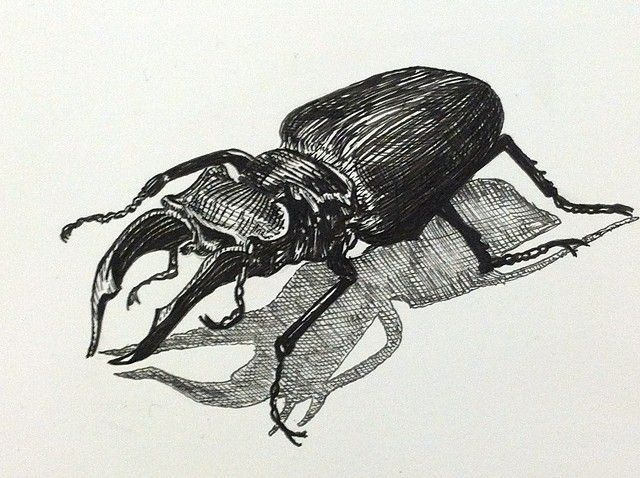 A Pen And Ink Black And White Drawing Of A Stag Beetle Bug
