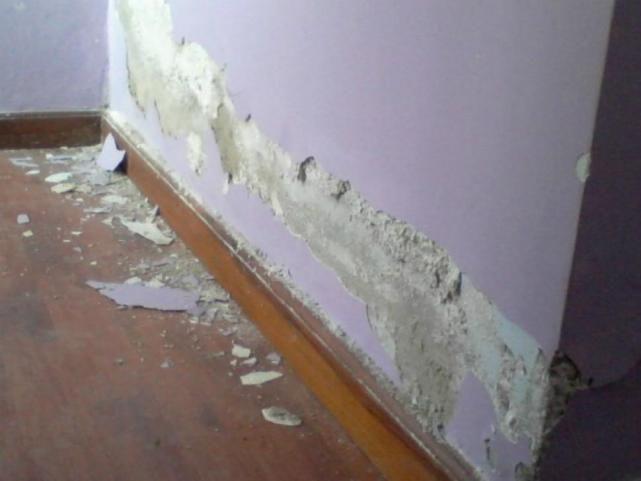 C mo eliminar el salitre de las paredes eliminar - Como eliminar la humedad de las paredes ...