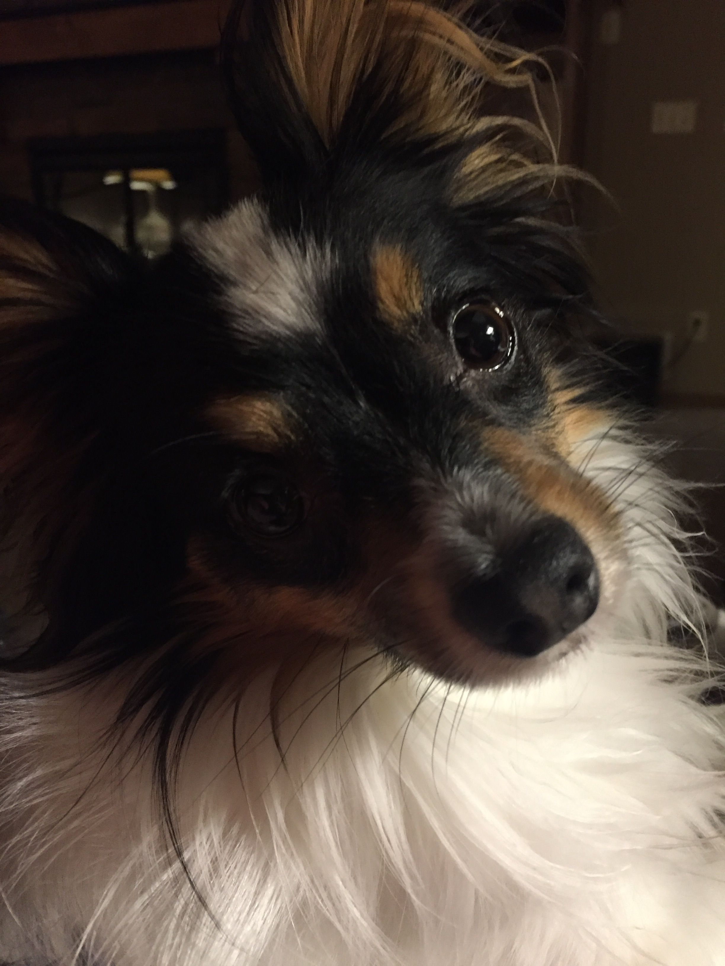 Pin by Shelly Zimmer on Pets I Love! Pets, Dogs, Animals