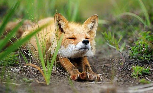 動物界にヨガが大流行!……としか思えない、ヨガポーズな動物たちの写真集