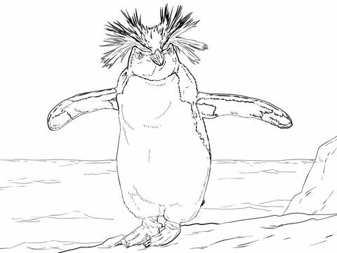 Northern Rockhopper Penguin Coloring Page From Penguins Category
