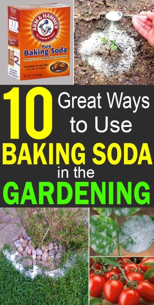 10 Great Ways to Use Baking Soda in the Gardening Garden
