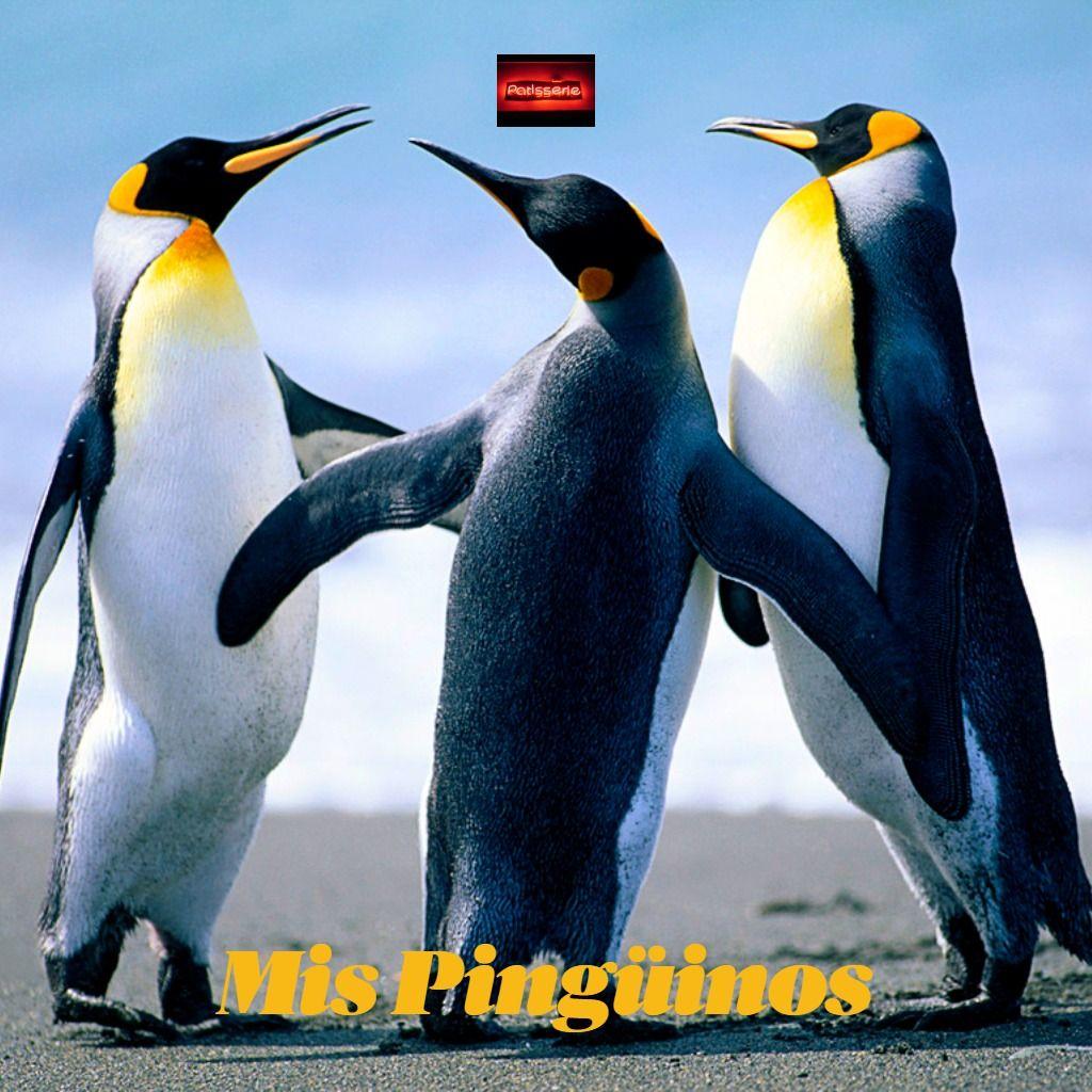 Los Pingüinos Animales En Peligro De Extincion Cursos De Decoracion En Peligro De Extincion