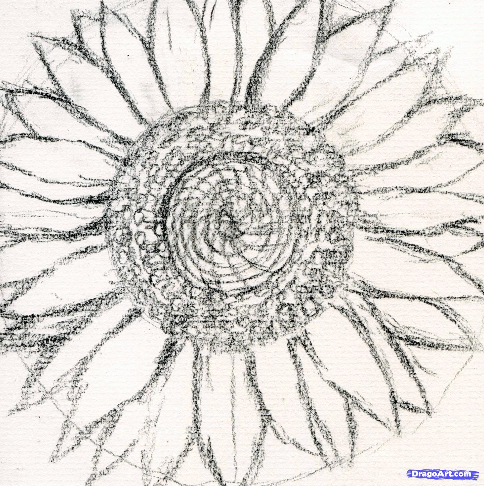 How To Draw A Sunflower Realistic Step 6