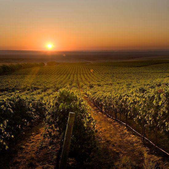 Best Washington State Wineries to Visit: Columbia Crest