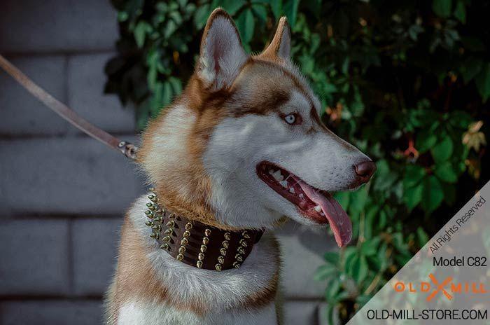 Spiked Siberian Husky Collar