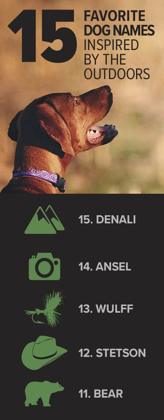 Our 15 Favorite Outdoor Dog Names Plus 12 More Orvis News Dog Names Outdoor Dog Dogs