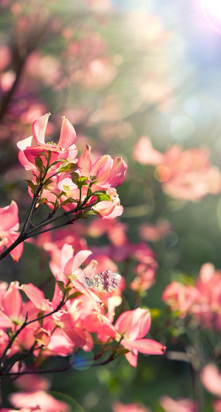 Beautiful Flowers My Garden Spring Wallpaper Beautiful Flowers Beautiful Flowers Wallpapers