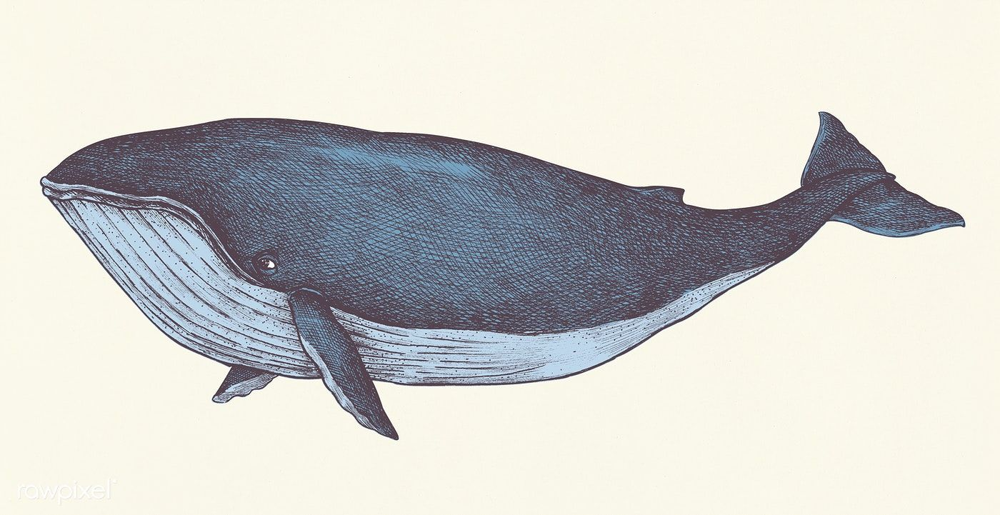 Download Premium Illustration Of Hand Drawn Blue Whale Retro Style 410964 Whale Illustration Blue Whale How To Draw Hands