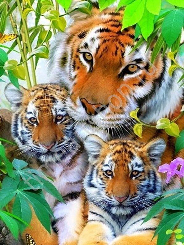 Тигриная семья, картина раскраска по номерам своими руками ...