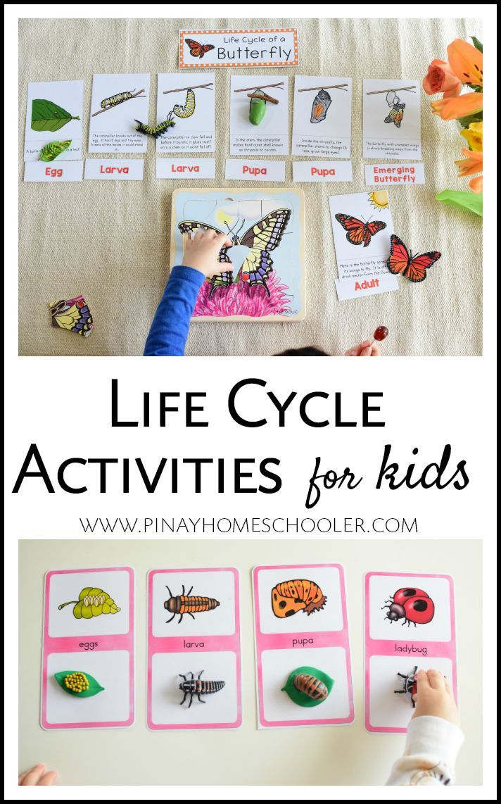 Life Cycle Activities for Kids | Kindergarten science ...