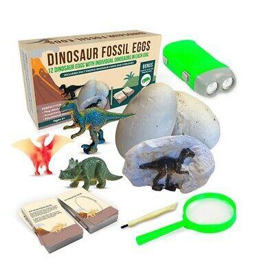 Dinosaur Fossil Eggs Kit, 12 pack, New, Ivystep | eBay