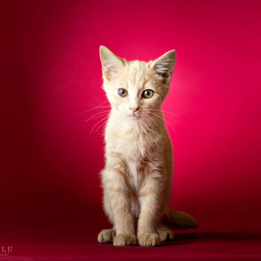 Hala Was Adopted Kitten Adoption Pretty Cats Cat Adoption
