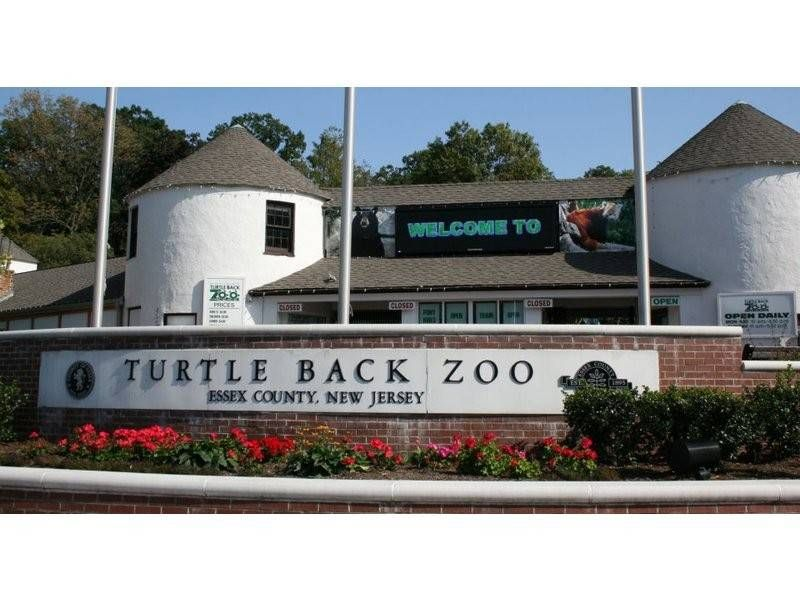 I loved going to the Turtle Back Zoo on Riker Hill field
