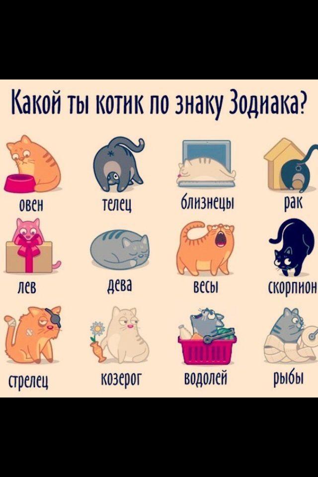 скачать игру какой ты кот - фото 6
