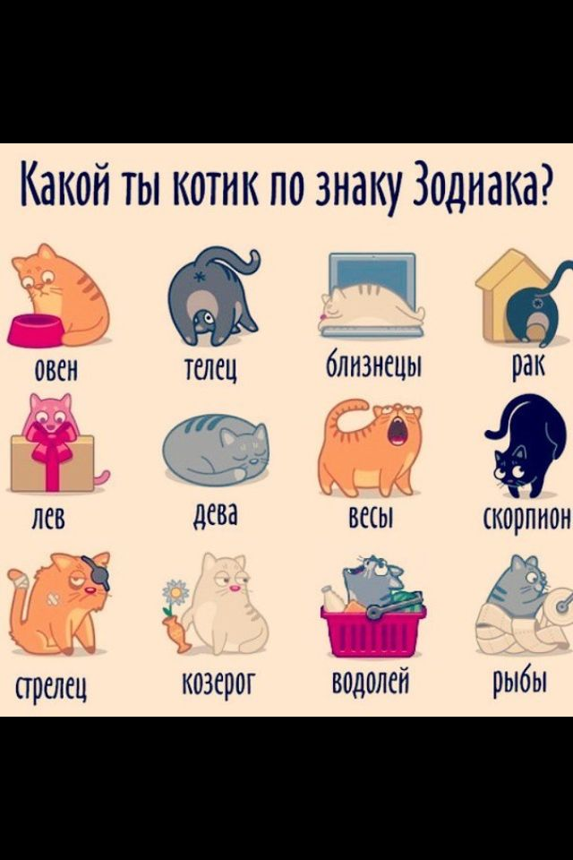Какое домашнее животное подходит тебе по знаку зодиака