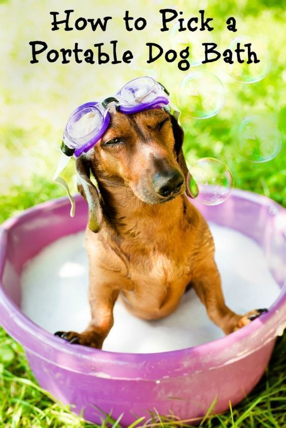 Tips For Choosing The Best Portable Dog Baths Bocephus Dogs