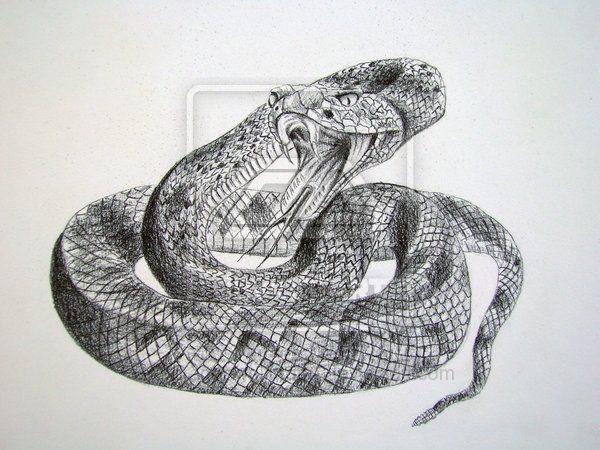 Rattlesnake By Dragonwolfmoon On Deviantart Rattlesnake Tattoo Snake Art Rattlesnake