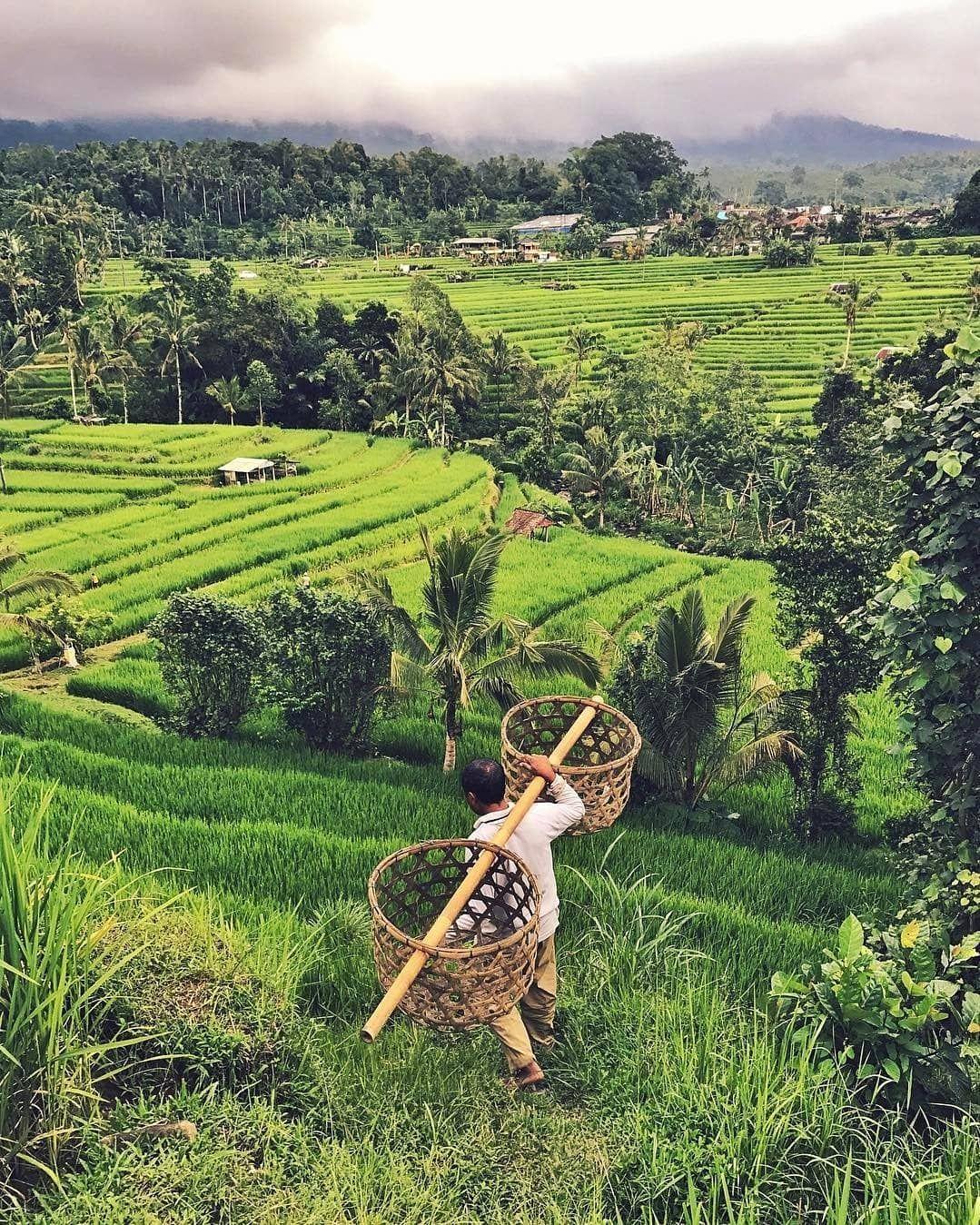 Jatiluwih Rice Terraces Bali Travel In 2019 Rice Terraces