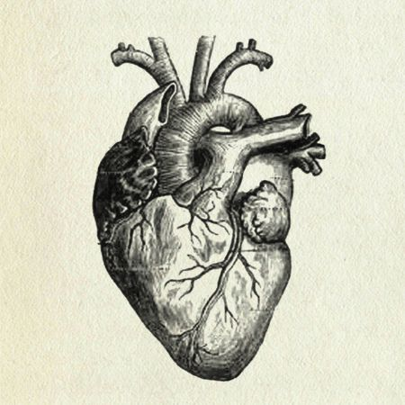 favorite black and white illustration of heart | asap - current, Muscles