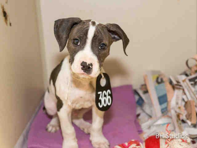 KISSES...HOUSTON, Animal Shelter adopt