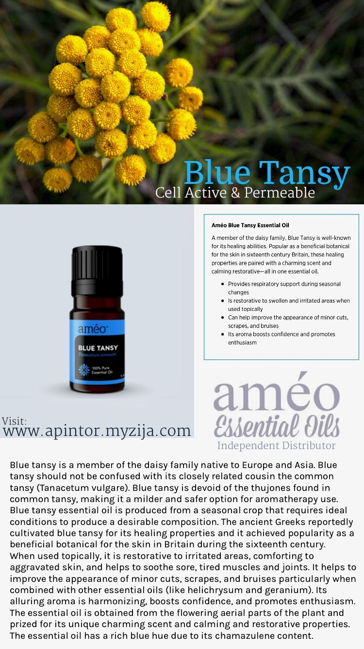 Tansy - application and beneficial properties 2