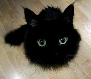 Pin En Cats