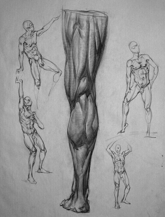 Anatoma De Pierna Anatomia Artistica Pinterest Anatomy