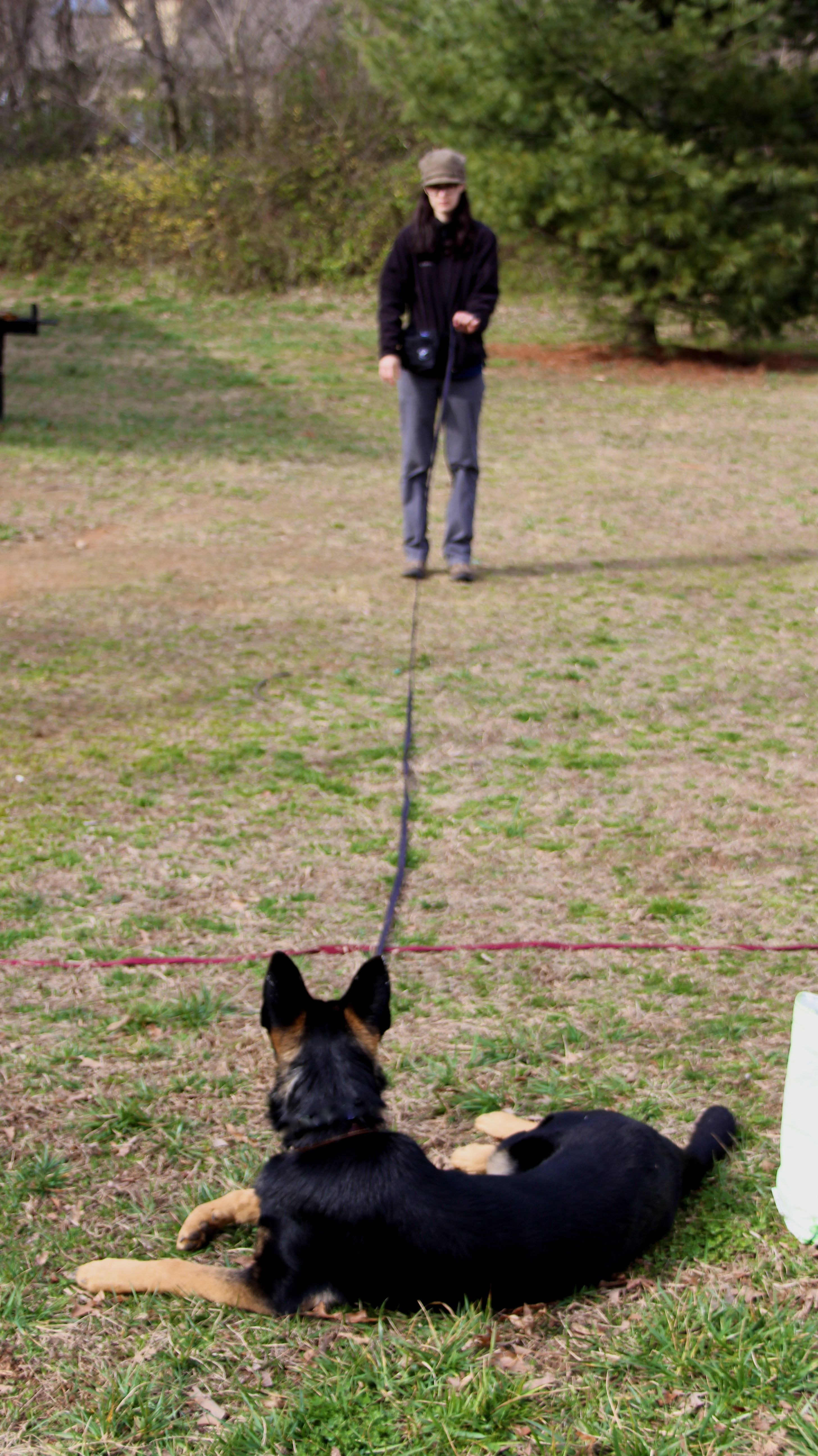 Make Your Dog Training A Success With These Simple Tips Visit