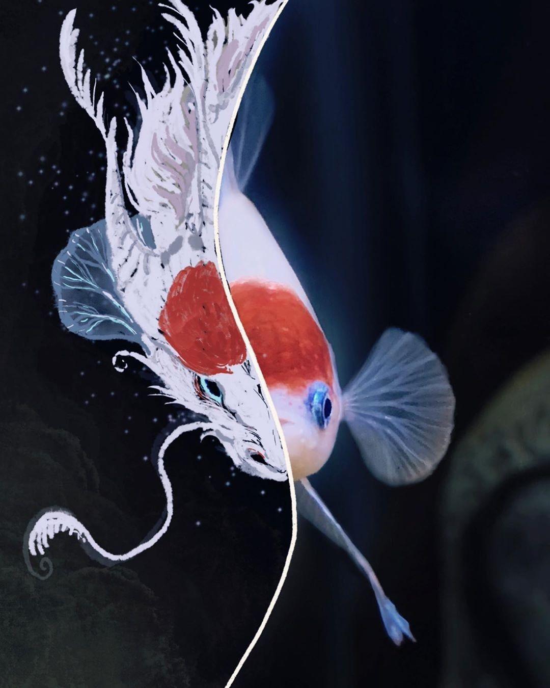 The Dragon And The Tancho Koi Betta Betta Fish Types Betta Betta Fish
