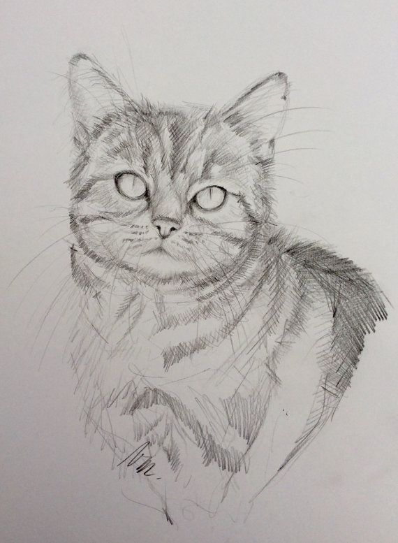 Dessin original crayon graphite sur papier bristol portrait de chat black and white original - Un chat dessin ...