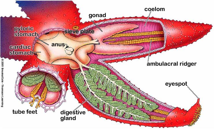 anatomy | Anatomy | Pinterest | Anatomy and Zoology