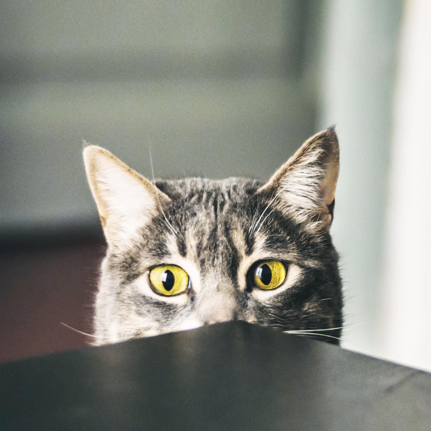 One Second After Hearing The Whipped Cream Can Asodiuesdiari Catsofig Instacat Funnycats Funnykitten Ilovemycat In 2020 Cats Kittens Funny Pets