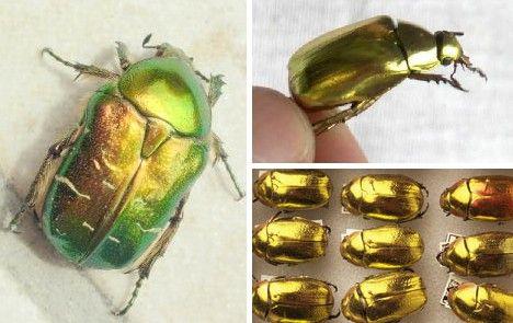Animal Metallicism: 10 Amazing Golden Creatures - WebEcoist