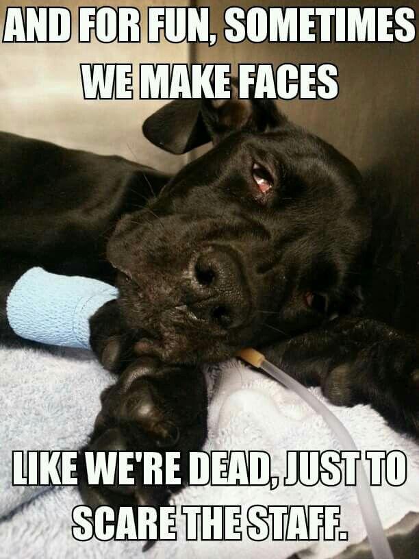 Dead Sleeper With Images Vet Tech Humor Veterinary Humor Vet
