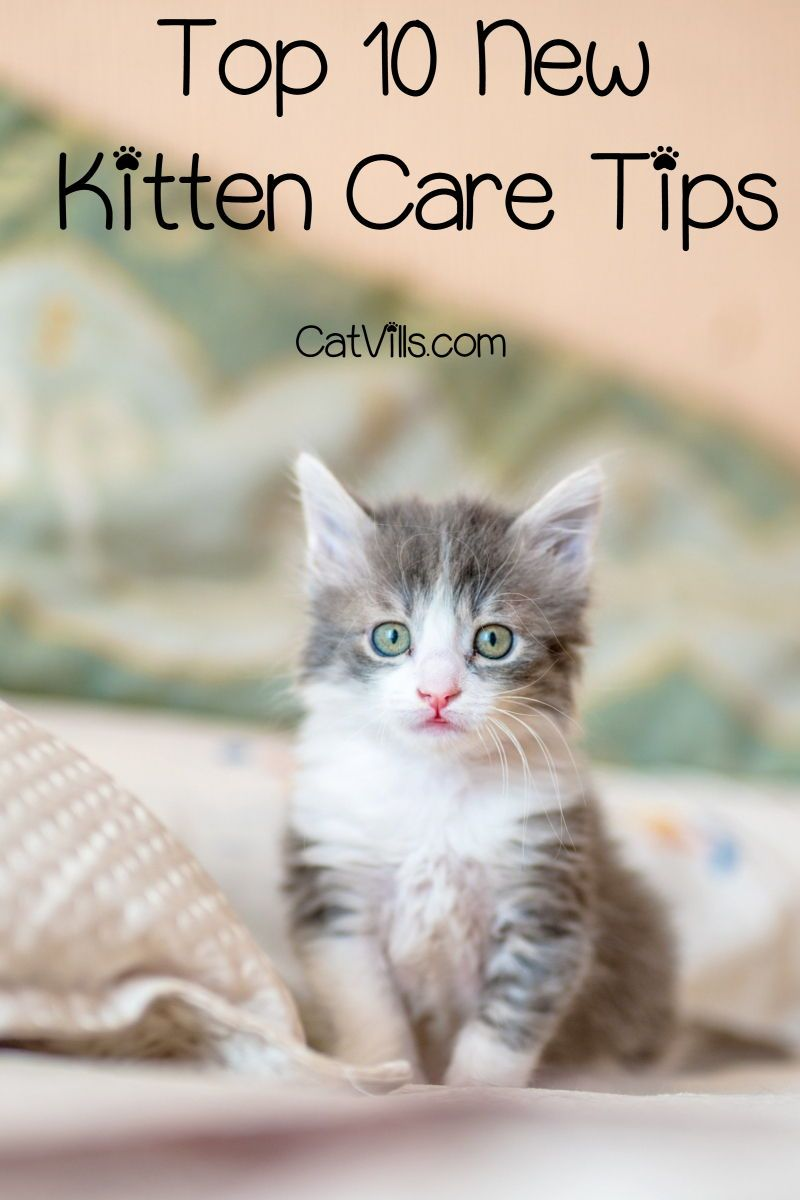 Top 10 New Kitten Care Tips You Need To Know Catvills In 2020 Kitten Care First Time Cat Owner Getting A Kitten
