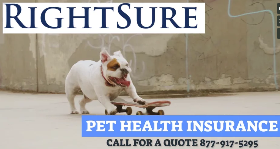 Call for a quote on Dog Insurance! 8779175295 Pet
